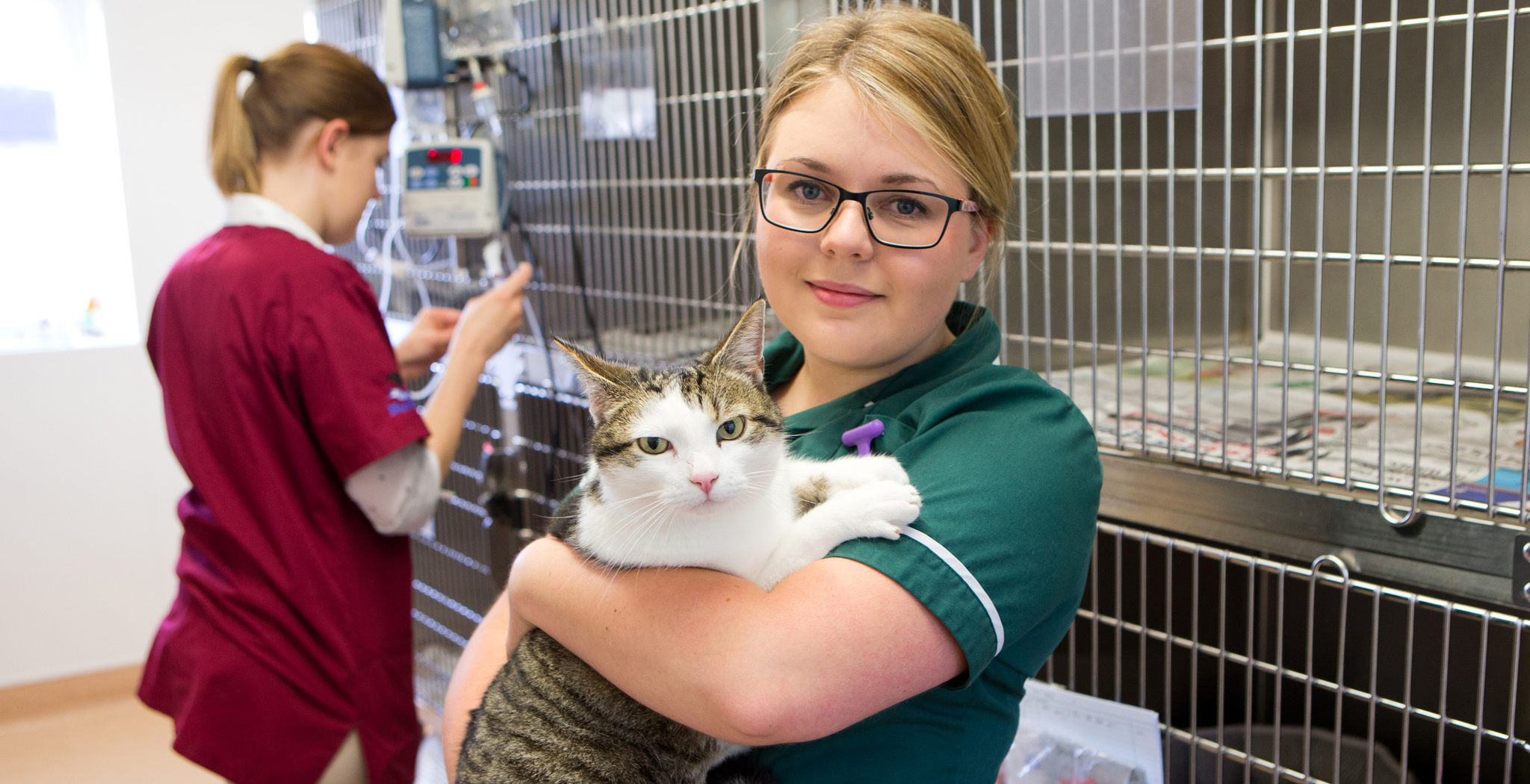 Marlow Vets Cattery
